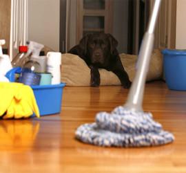 Household Cleaning - NewSun schoonmaakbedrijf Utrecht